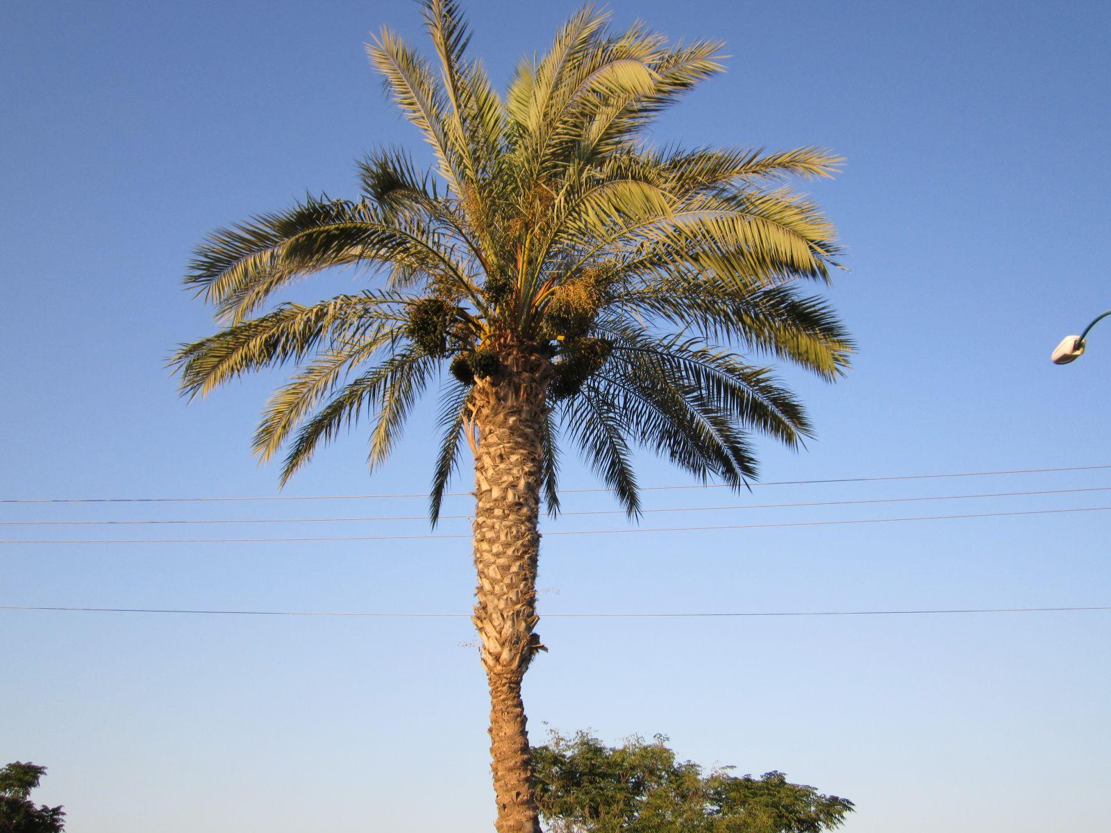 Просто пальма))